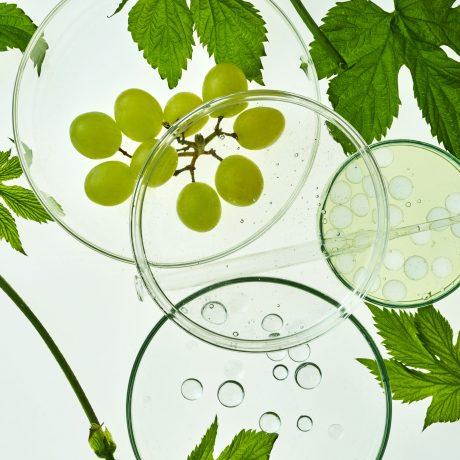 monteil chardonnay vynuogiu ekstraktas kremas brandziai odai